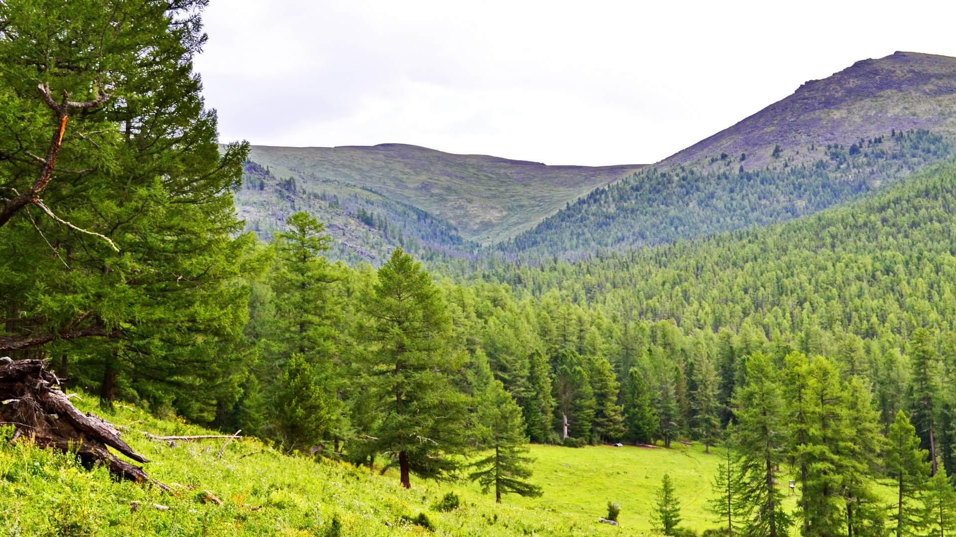 Стоянка перед Горелым лесом.