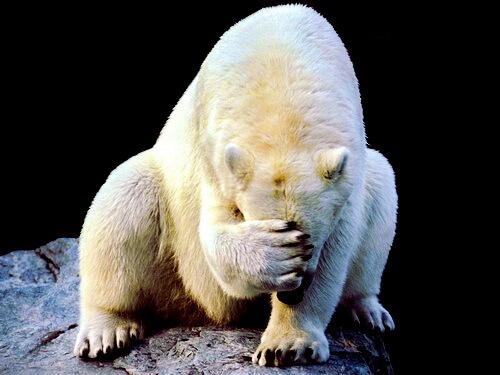 Стыд Белого Медведя.